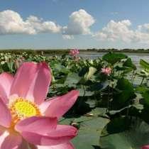 Экскурсия на лотосовые поля и в дельту Волги +уха, в Астрахани