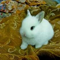 Пушистые крольчата декоративной породы, в Пензе