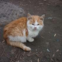 Котята, в Тамбове