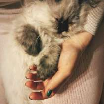 Пропала кошка Ася 5 июля 2021 года Малые Вязёмы, в Одинцово