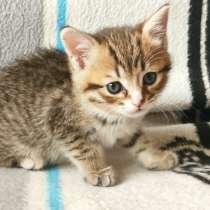Котёнок в добрые руки, в Королёве