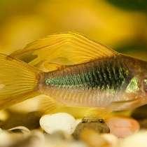 Рыбки, дафния, улитки, водоросли, обмен, в Аксае