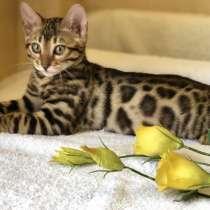 Предлагаются Бенгальские котята из питомника с документами, в г.Вильнюс