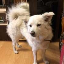 Найдена белая собака, в г.Барановичи