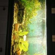 Продажа аквариума, в Волоколамске