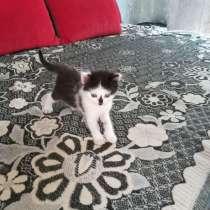 Отдам котят 1,5 месяца, потомственные крысоловы, в г.Балаклава