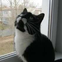 Кошка ищет дом, в Череповце