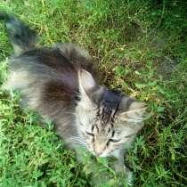 Котята с Кошкой бесплатно Сумы!!!, в г.Сумы