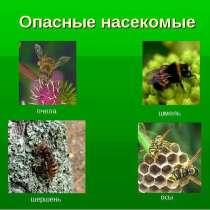 Шершни, осы, тараканы, клещи и скорпионы - Избавим, в Сочи