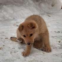Маленький щеночек ищет дом, в г.Лида
