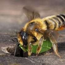 Пчелопакеты 2021, в Тосно