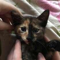 Отдам котёнка в добрые руки, в Хабаровске