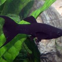 Рыбки, в Симферополе