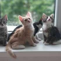 Красивые, ласковые, игривые! Котята в добрые руки, в Москве