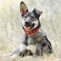 Джой- семейная собака!, в Москве