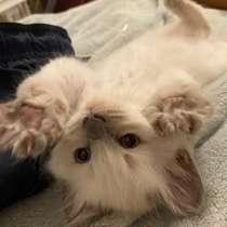 Котёнок, 1,5 месяца, мальчик, в Дзержинске
