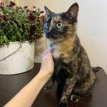 Кошка ищет ответственную семью!, в Шелехове