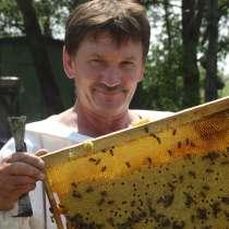 Разнотравье лесо-луговое мед урожая 2019, в Бийске