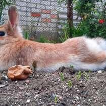 ПРОПАЛ декаротивный кролик, в Приморско-Ахтарске