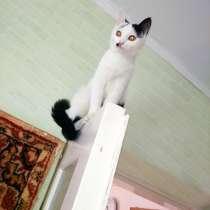 Подарю котят в хорошие ручки!, в г.Тараз