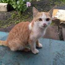Котенок ищет дом, скоро зима, в Челябинске