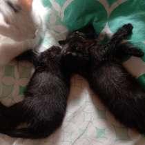 Котята даром в хорошие руки, в Химках