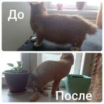 Стрижка кошек и котов, в Усть-Илимске