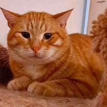 Рыжий кот ищет дом, в Москве