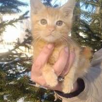 Продам котят курильского бобтейла, в Хабаровске
