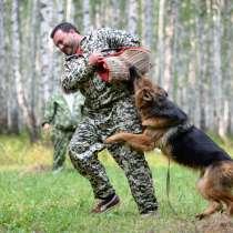 Дрессировка собак профессионально, в Челябинске