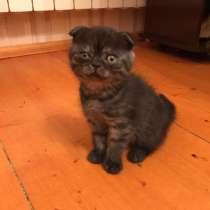 Продаю породистых котят, в г.Баку