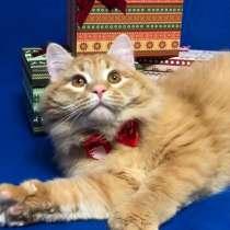Невероятно классный солнечный котик ищет дом!, в Люберцы