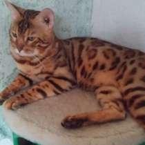 Котик предлагает услуги кошечкам, в Белореченске