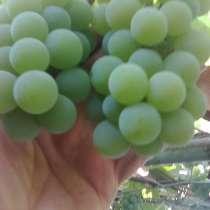 Продам винный виноград, в г.Рубежное