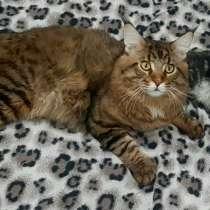 Вязка кота, в г.Витебск