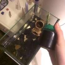 Рыбка, в Кудрово
