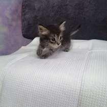 Котёнок мальчик звонить по этому номеру, в Усть-Илимске