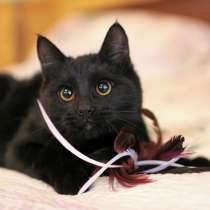 Котик Багир ищет надежный дом!, в Москве