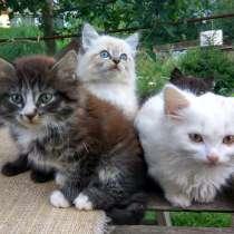 Отдам котят в добрые руки!!!, в Раменское