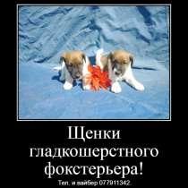 Щенки гладкошерстного фокстерьера!, в г.Тирасполь