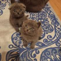 Продажа котят, в г.Бердянск