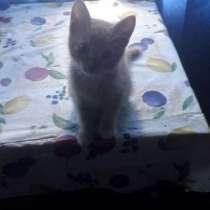 Котенок, кошечка в добрые и надежные руки, в Екатеринбурге