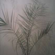 Финиковая пальма, в Красноярске