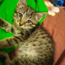Отдам котёнка (девочка) в добрые руки, в г.Актау