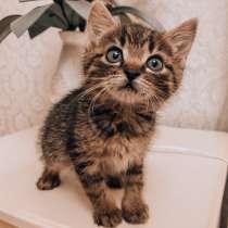 Отдам в хорошие руки котёнка, в г.Барановичи