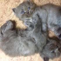 Котята, в Тосно