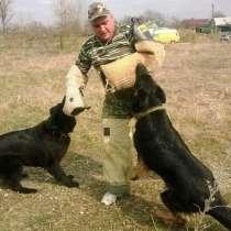 Дрессировка собак, в Новокубанске