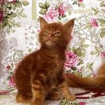 Котёнок Добрыня. Шоу класс. Питомник, в Перми