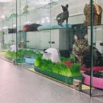 Гостиница для кошек, м. Смоленская, в Москве