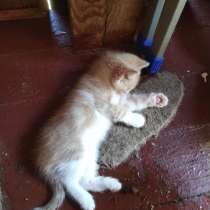 Котёнок, в Кингисеппе